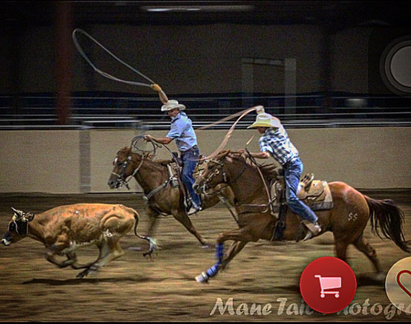 Cole Bunting, Roping