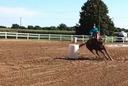 Halle Brandt, Barrel Racing