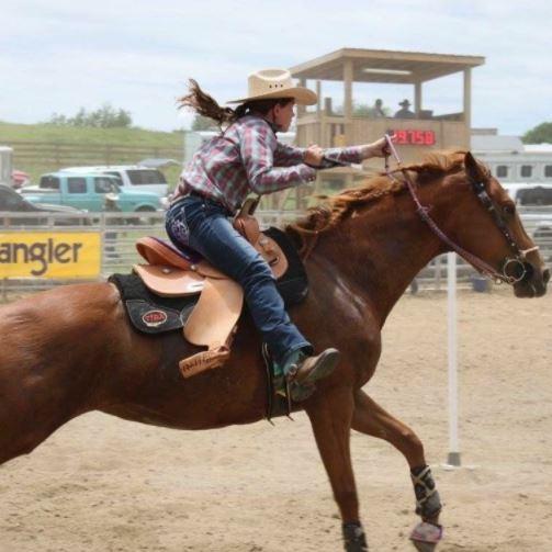 Americas 1 Horse Trailer